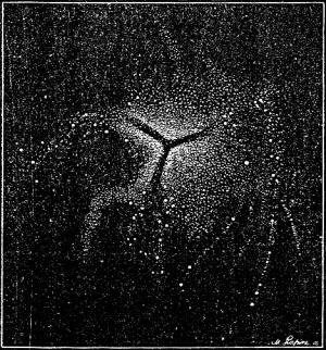 Ki jo wilson, Grey anatómiája