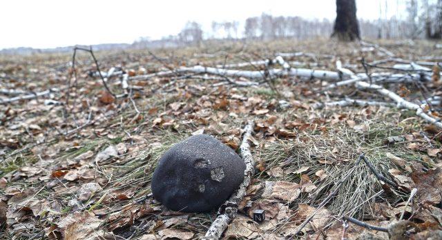 Cseljabinszk_meteorit_In_situ_foto